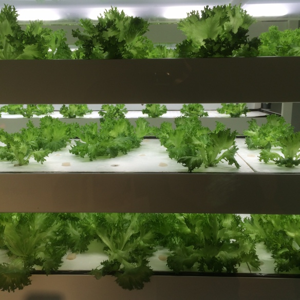 Indoor salad garden, Itoya department store, Ginza, Japan (Photo © Rory Manchee, all rights reserved)